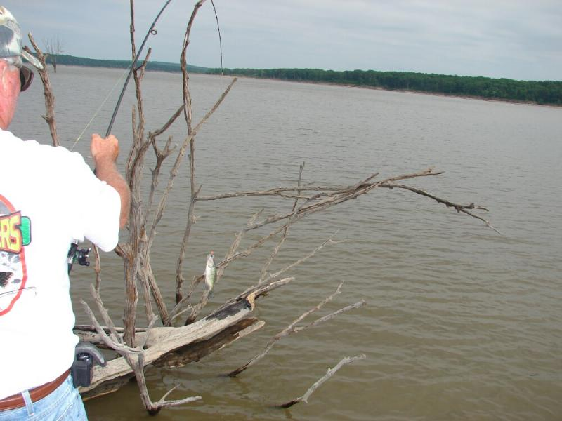 Charlie brewer 39 s slider company pictures for Truman lake fishing report